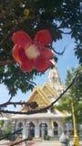 Flor de Sala Fotografia de Stock Royalty Free