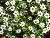 Flor de Serie fotografía de archivo