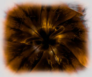 Flor 1 de Slimey Fotografia de Stock
