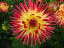 Flor de Spikey Imagens de Stock Royalty Free