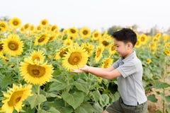 Flor de Sun Fotos de archivo libres de regalías