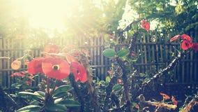 Flor de Sun da manhã Imagens de Stock Royalty Free