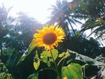 Flor de Sun no céu fotos de stock royalty free