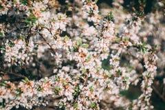 Flor de surpresa do ver?o na foto macro do close up bonito do jardim fotos de stock royalty free