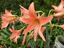 Flor de Swallowtail imagens de stock royalty free
