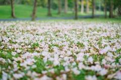 Flor de trombeta bonita que floresce, foco seletivo Imagem de Stock