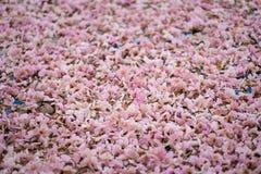 Flor de trombeta cor-de-rosa na grama Fotos de Stock Royalty Free
