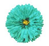A flor de turquesa, branco isolou o fundo com trajeto de grampeamento closeup Imagens de Stock