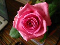 A flor de um cor-de-rosa aumentou Fotografia de Stock