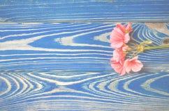 A flor de um gerânio das mentiras corais da cor em um fundo branco fotografia de stock