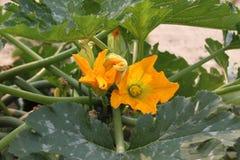 Flor de uma planta da polpa Fotos de Stock Royalty Free