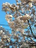 Flor de uma ?rvore imagens de stock