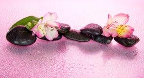 Flor de un alstroemeria y de piedras en agua Foto de archivo