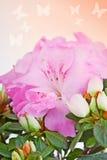 Flor de una azalea rosada Fotografía de archivo libre de regalías