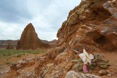 Flor de vidro da montanha Fotografia de Stock