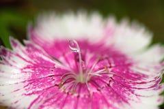 Flor de Waterdrop Foto de archivo libre de regalías