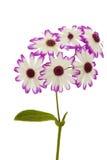 Flor de Weed Imagens de Stock