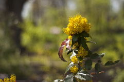 Flor de Yelow Imagem de Stock