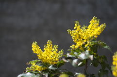 Flor de Yelow fotos de stock royalty free