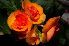 Flor decorativa Foto de Stock