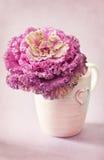 Flor decorativa de la col Fotos de archivo