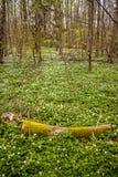 Flor decorativean selvagem do verão dos amones Fotografia de Stock Royalty Free