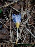 Flor deixada cair imagem de stock