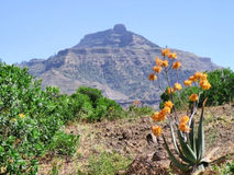 Flor del áloe en montañas Fotos de archivo libres de regalías