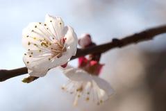 Flor del árbol foto de archivo libre de regalías