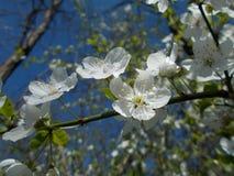 Flor del árbol Imágenes de archivo libres de regalías