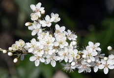 Flor del árbol Imagenes de archivo