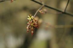 Flor del árbol Fotografía de archivo libre de regalías