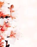 Flor del árbol de almendra foto de archivo