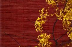 Flor del árbol de ducha de oro en rojo Fotos de archivo