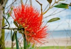 Flor del árbol de navidad Imágenes de archivo libres de regalías