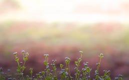 Flor del área de la pista de aterrizaje del centro de la hierba Fotografía de archivo