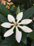 Flor del flor Foto de archivo libre de regalías