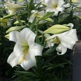 Flor del flor imagen de archivo libre de regalías