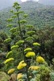 Flor del agavo Foto de archivo libre de regalías