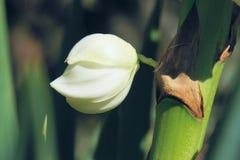 Flor del agavo Fotos de archivo libres de regalías