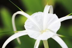 Flor del agua fotos de archivo
