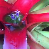 Flor del agua roja Imagenes de archivo