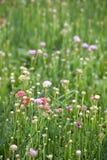Flor del ahorro Imagen de archivo