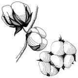 Flor del algodón del Wildflower en un estilo del vector aislada Fotos de archivo