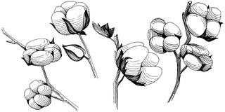Flor del algodón del Wildflower en un estilo del vector aislada Foto de archivo