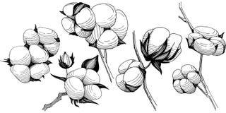 Flor del algodón del Wildflower en un estilo del vector aislada Fotografía de archivo