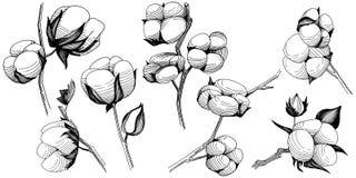 Flor del algodón del Wildflower en un estilo del vector aislada Fotos de archivo libres de regalías