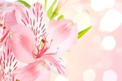 Flor del Alstroemeria/ Fotografía de archivo
