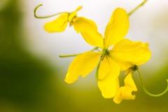 flor del amarillo del  del ¹ del à hermosa Fotos de archivo libres de regalías