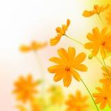 Flor del amarillo de Beautyful Imagen de archivo